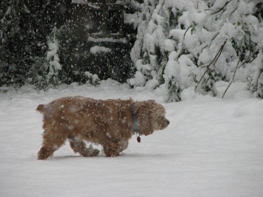 2nd Chance, the Cocker Spaniel, has a home. He was just out playing in the snow, but many dogs and cats have to stay out in the cold all the time.