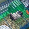 HamsterAlive3 profile image