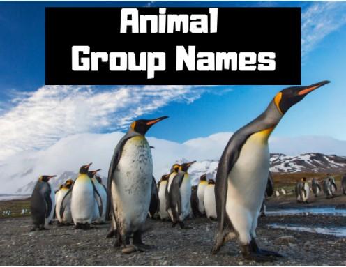 A Comprehensive List of Animal Group Names