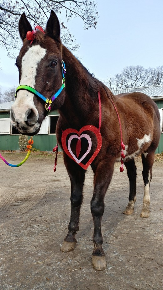Romeo as a Valentine, what else would he be?