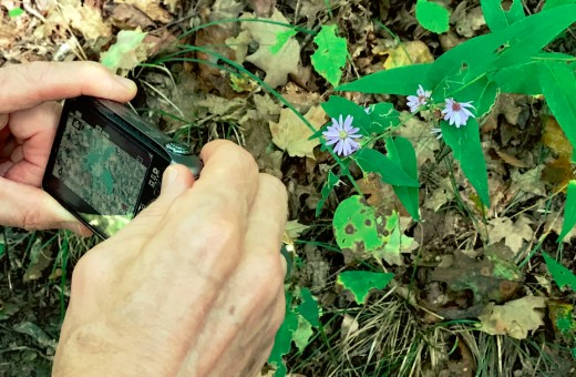 Taking photo of wildflowers