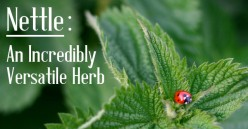 Nettle: An Incredibly Versatile Herb