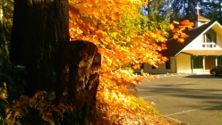 It's Fall: A Writing Challenge by Lori Colbo
