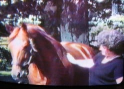 The Day I Touched Secretariat