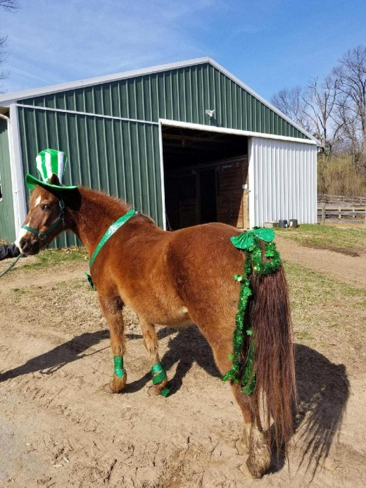 Dejavu' Dublin, dressed up in his St.Patty's day best!