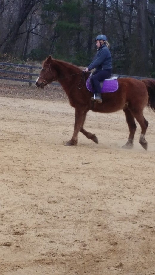 Dublin doing his thing, working as a lesson horse.