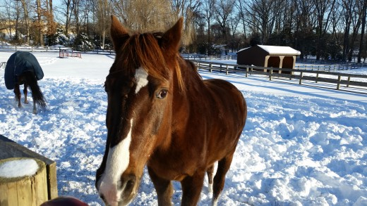 Winter Dublin! He has a huge thick coat that has never required blanketing to keep warm. He seems to enjoy the cold and snow.