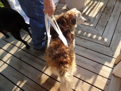 How to Make A Support Sling for Your Dog