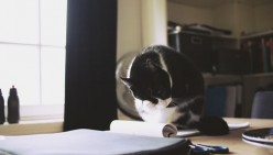 Meow. Woof. Quack. These 7 Tips From Your Pet About Your Writing Journey Are Eye-Opening