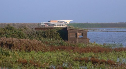 The Island Hide (foreground) and Parrinder Hide (background) as seen from the West Bank. Source: Jimfbleak via Wikimedia Commons