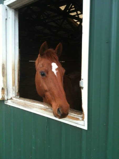 Maybe you want your horse to have a stall with a window to look out of... know what you are looking for in a barn.