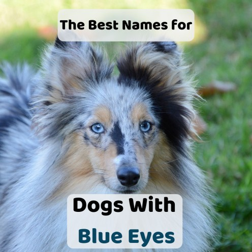 70+ Unique Names For Dogs With Blue Eyes