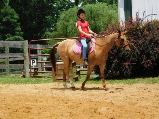 One of the two riders in my first lesson. Not the same horse that she was on today though.
