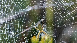 Spiders and spider webs have long fascinated us in a positive way