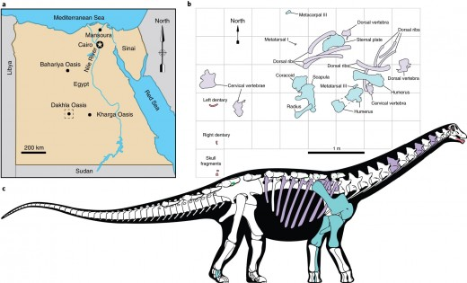 Site of discovery and projected anatomy of Mansourasaurus, by Andrew McAfee.