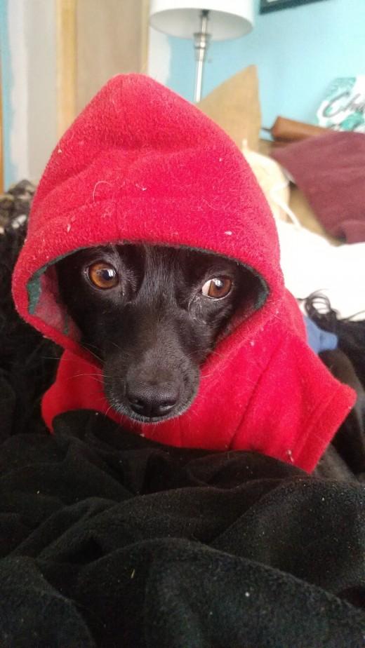 Ziva in her hoodie!