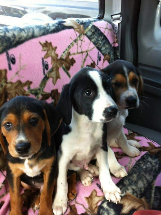 Cover the truck seat! The dogs are going to get dirty! This is Texas, Caleb and Eli as babies. Weren't they just the cutest?