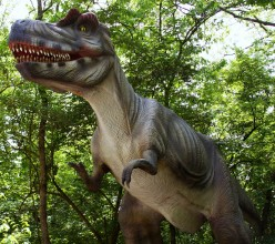 Interesting Facts on Tyrannosaurus Rex & Albertosaurus