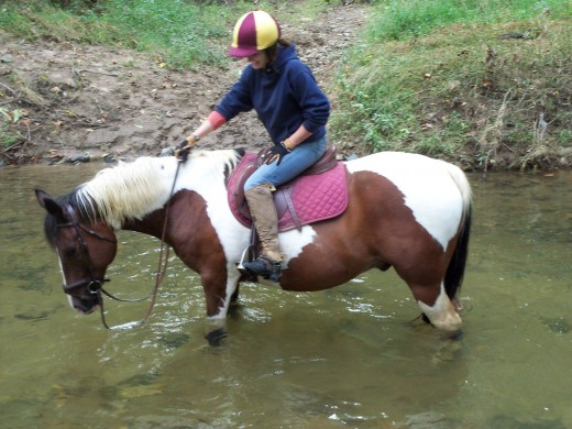 Buddy came to me as a project. He was not broke to ride and intimidated his previous owner in everything they did with him. After getting him going under saddle, I sold him to Megan and for her they are a perfect match. He is old and retired now.