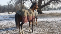 The Alphabet Of Horses-Winter Style