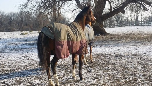 I get cold and grumpy just looking at this picture. My horse Danny makes me happy though, and he didn't mind the cold!