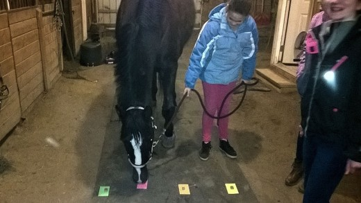 This is a fun little experiment we did to find out horses favorite colors, we put treats on index cards and then had them approach three times and see how often they chose the treat on the same color card. Kids had a blast with it.