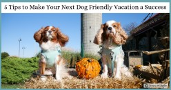 5 Tips to Make Your Next Dog Friendly Vacation a Success