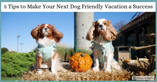 Dog-Friendly Road Trip Tips