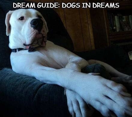 white dog in dream