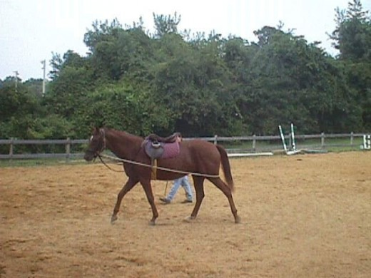 Sometime lunging can be helpful if done properly.