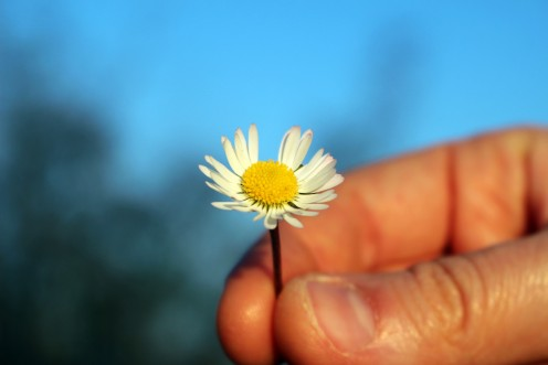 A Man and a Daisy: A Poem