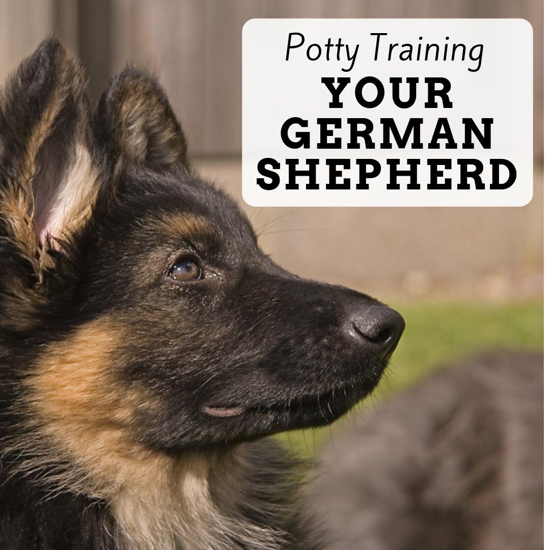 Tips For German Shepherd Puppy Potty