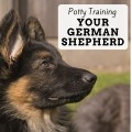 Housebreaking a Puppy: 12 Tips for German Shepherd Puppy Potty Training