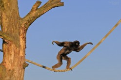 With Mind Just Monkeying Around: A Poem