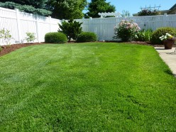 Weed and Feed: A Quick and Easy Lawn Care Guide