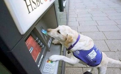 Service dog uses an ATM machine