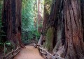 Best Explorations for Kids: John Muir Woods