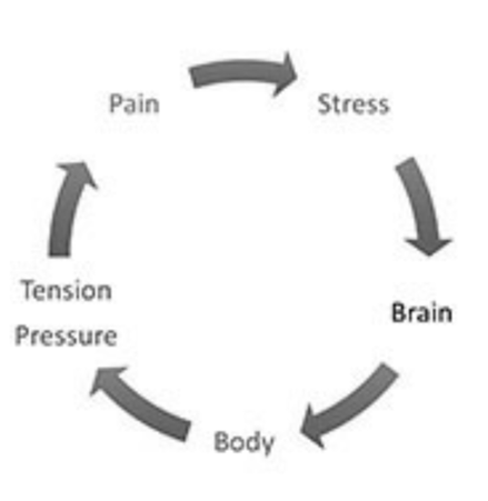 The Chronic Pain Vicious Cycle theorized by Bill Hartman explains why people are in chronic pain