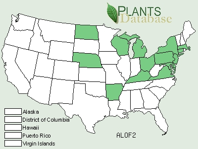 Green States grow Marshmallow, still used in teas and herbal medicine.