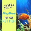500+ Cool and Creative Fish Names for Goldfish and Bettas