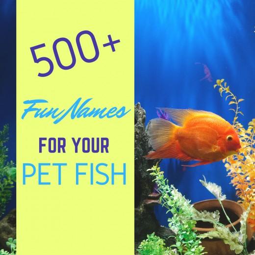 500+ fun names for your pet fish.