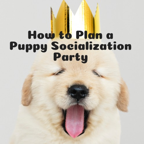 How to Organize a Puppy Socialization Party