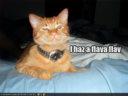 This is the Internet, don't think you're getting out of here without a LOLcat...
