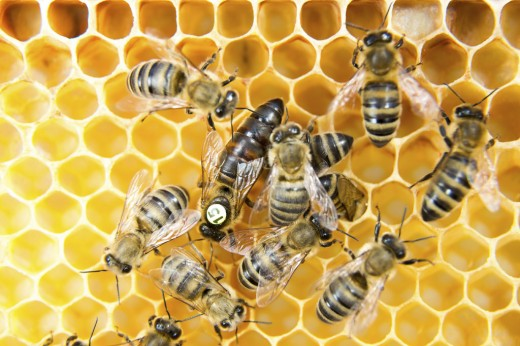 Queen bee is marked with 15 and a yellow dot.