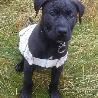 My pup's first time playing outside in the rain
