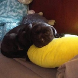 The first day I brought him home, cuddling with his favorite pillow.