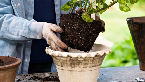 Your cramped plants will grow faster when you transfer them into a larger container.