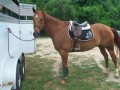 Interview With Marley The Lesson Horse