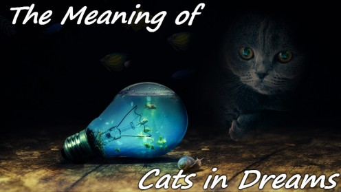 The Meaning Behind Dreams About Cats