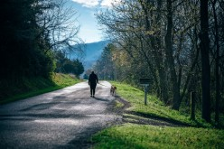 Life Lessons Learned From Walking The Dog